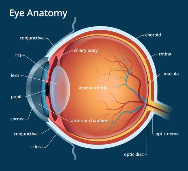 Vitaminok és táplálék a látáshoz